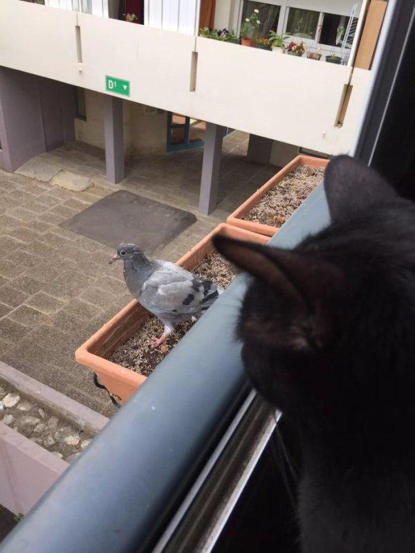"""Ma journee commence mal...j ai chopé un pigeon au vol ...sur mon balcon ...""""Elle""""a dit waou ...puis """"elle"""" me l a retiré des pattes !!! J suis vénère là ..?"""