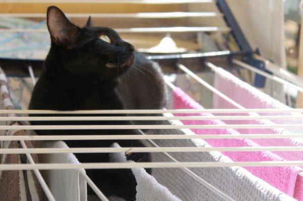 """.on peut surveiller """"les volants"""" ...discrètement entre 2 serviettes.."""