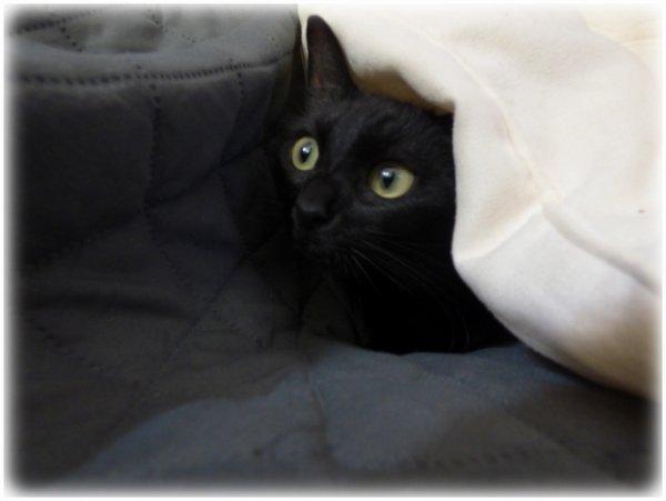 Bien froid pour une soirée d'été..vite...sous le coussin moelleux du canapé...Bonne nuit miaoubizz à demain !