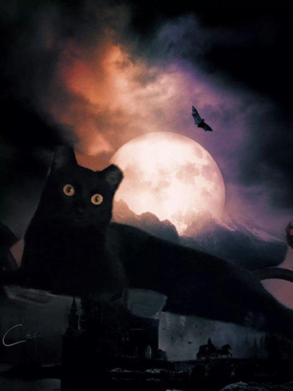 Halloween ? approche...vous n auriez pas un déguisement de chat ? noir à me prêter ? ?