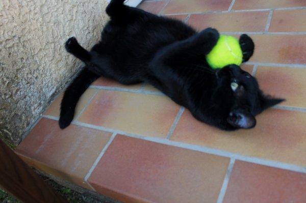 Chalut..je m'essaye au tennis ce matin..Miaoubizzz