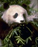 Photo de joli-panda
