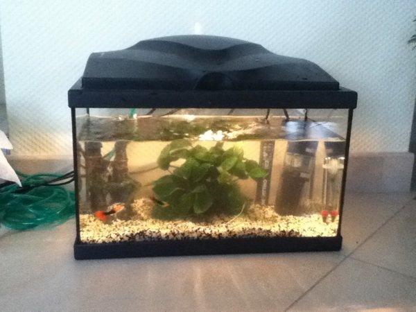 Aujourd'hui ces matinée nettoyage de l'aquarium