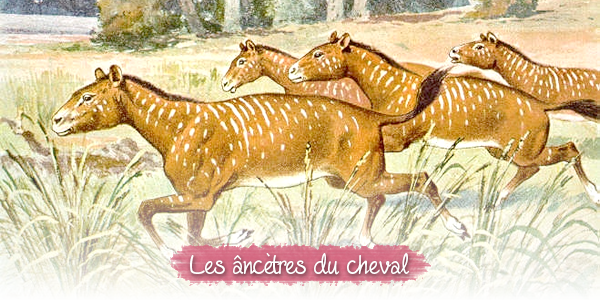 Les ancêtres du cheval