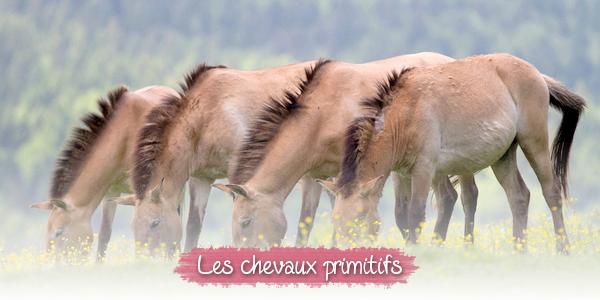 Les chevaux primitifs