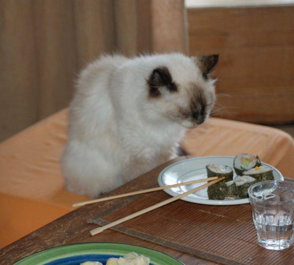 Même mon chat se met au makis... miam...