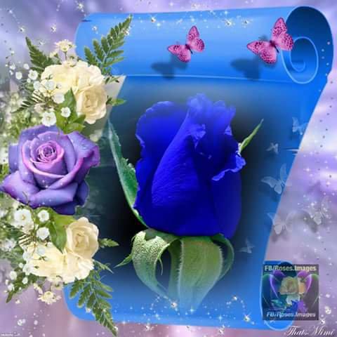 Bonne journée parfumé de rose
