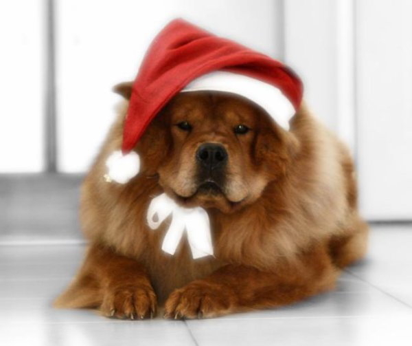 Joyeuses fêtes!!!