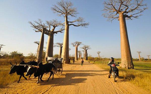 Là c'est à Allée des Baobab