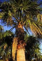 Tresser du panier est l'activité principale de mon village !!Les plantations de palmeraies  occupent presque toutes les terres !