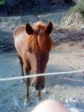 Photo de xx-horse-manon-xx