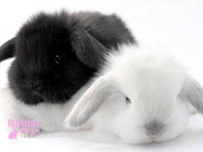 Des lapins trop mignons blog de missprincessebibilea49 - Photo de lapin mignon ...