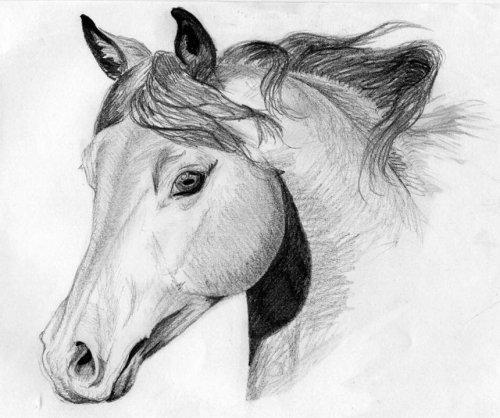 Dessine moi un cheval!