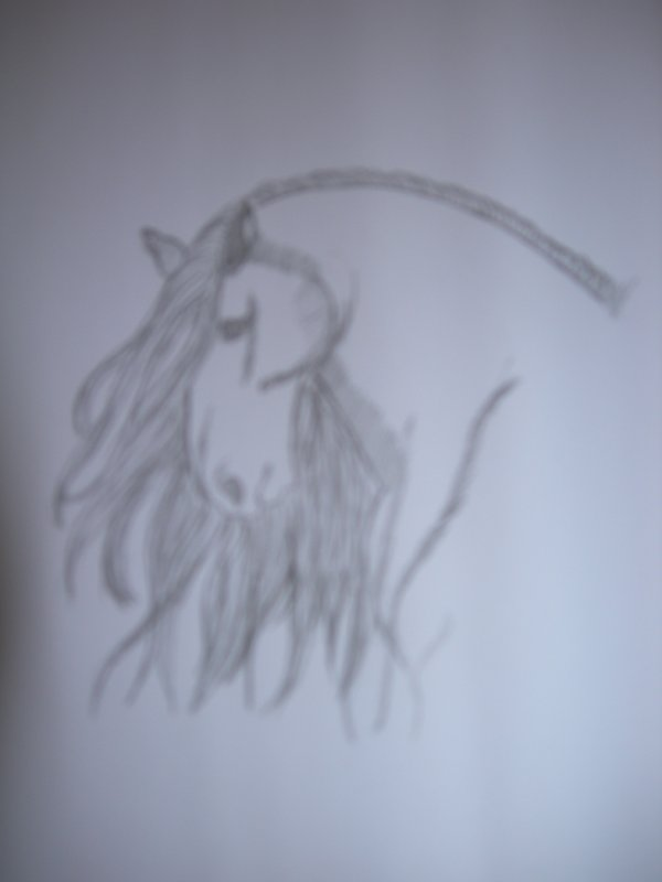 dessine moi un pur-sang espagnol