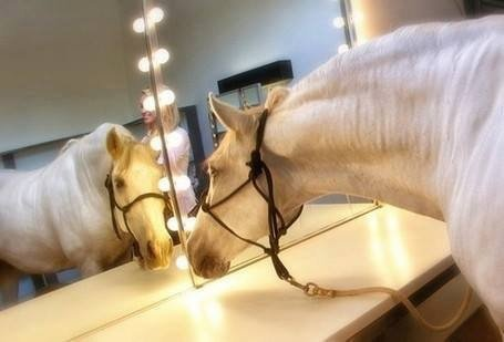 Le cheval star !