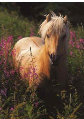 En disant qu'un cheval c'est notre vie, cela signifie que nous construirons une complicité jusqu'à la fin de l'une de nos vie mais nous ne l'oublierons pas ...