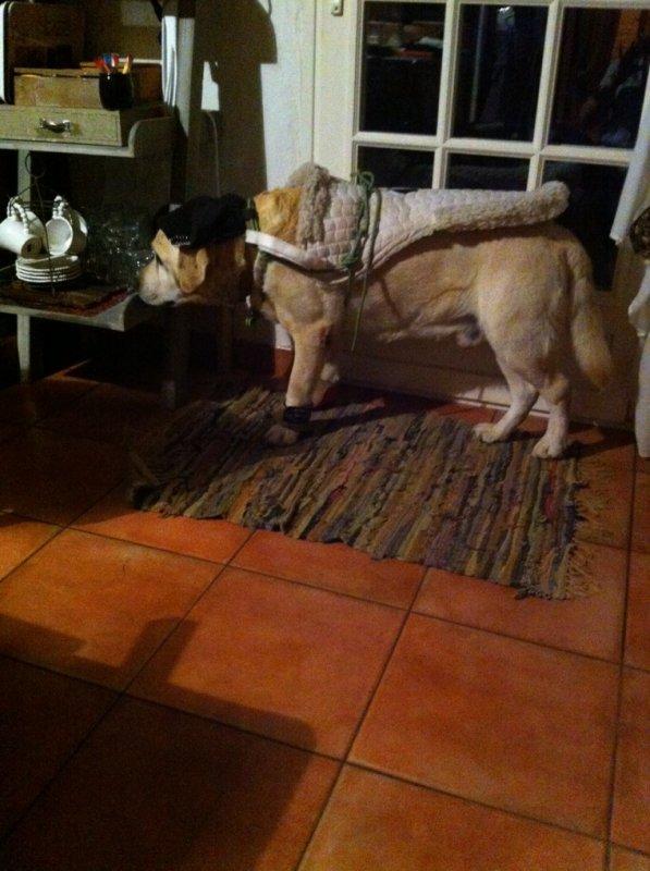 Mon chien déguiser en mode cheval sa donne sa ! :P