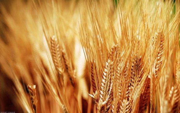 Nouveau site d'achat de produits bio et equitables !