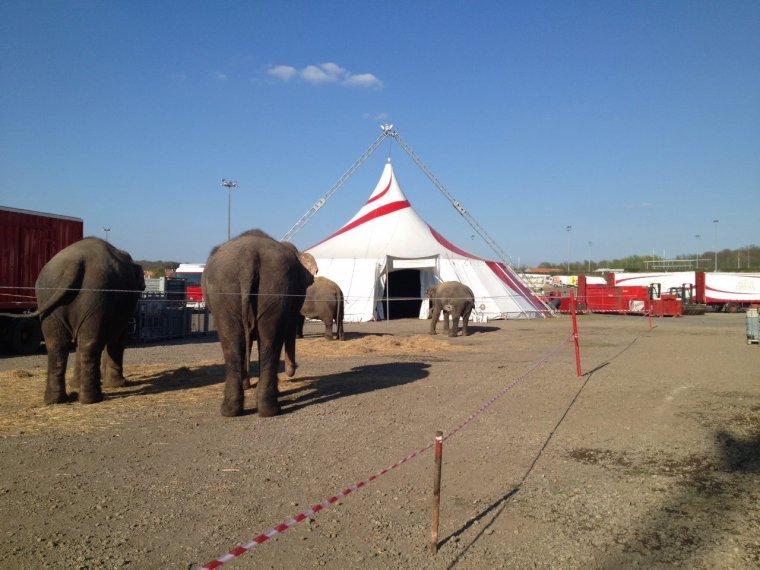 Arlette Gruss > Nos éléphants profitent du soleil