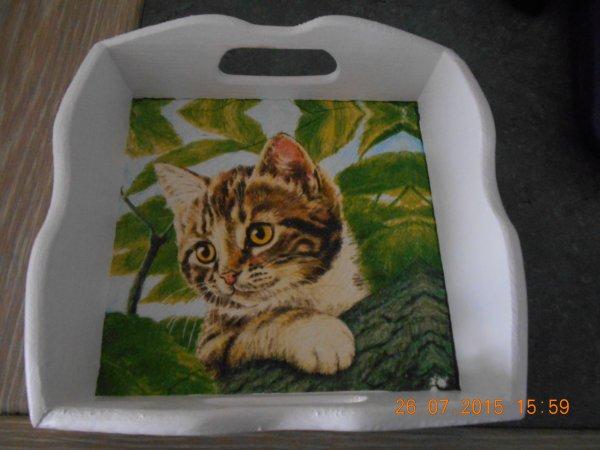 un autre serviettage de chat.