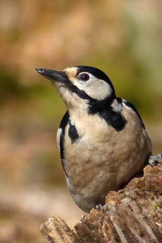 oiseaux au mirador