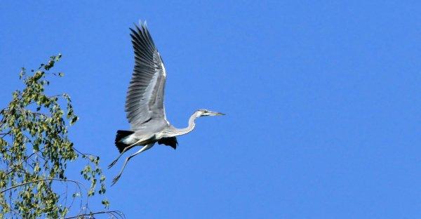 divers oiseaux ..... et autres
