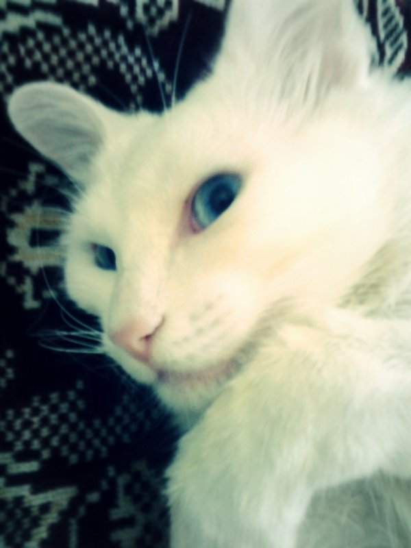 my sweet cat ^^
