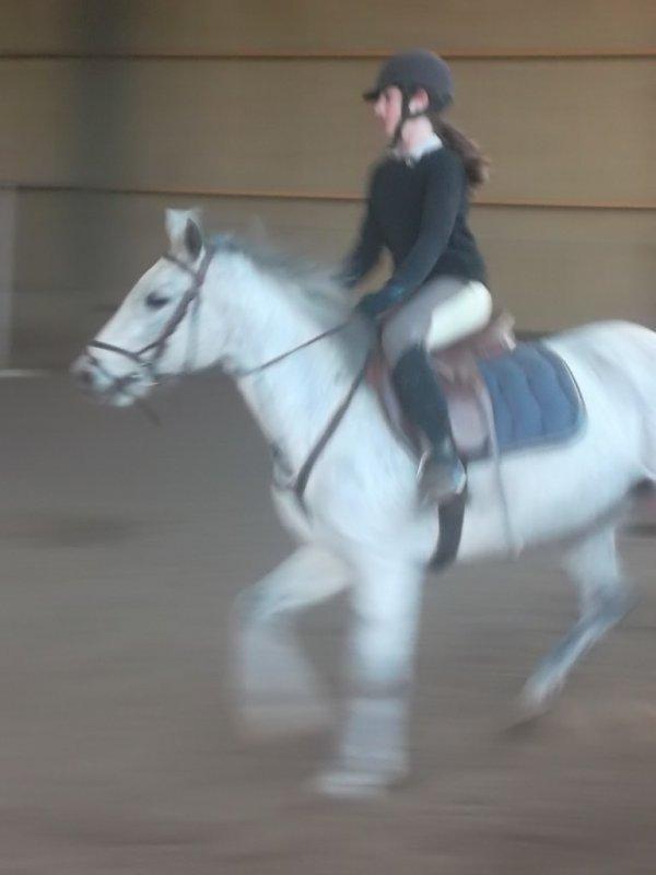 """""""Le cheval est l'artiste le cavalier est son chorégraphe."""""""