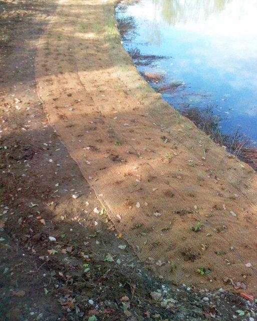 plantation d'herbes aquatique