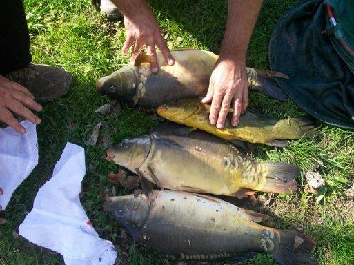 pascal apres mon depart (tous les poissons sont reparti a l'eau)