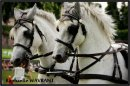 Photo de x-cheval--passion
