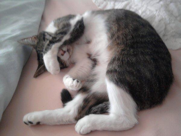 un de mes chats