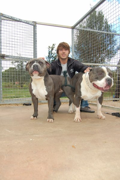 American-bully-center  * Easy * X BigBenBullie * Loko *