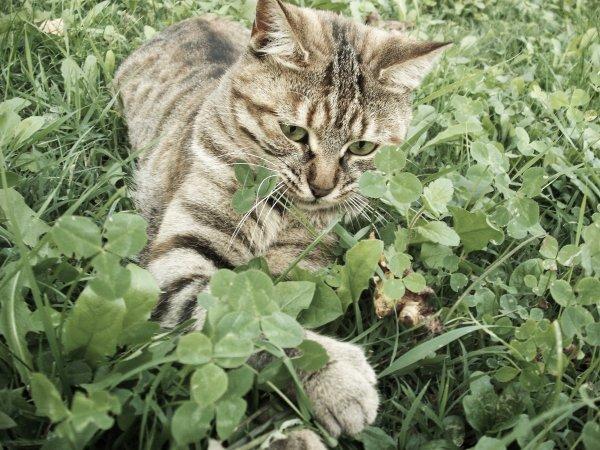 ►   On ne choisit jamais un chat, c'est lui qui vous choisit.   ◄