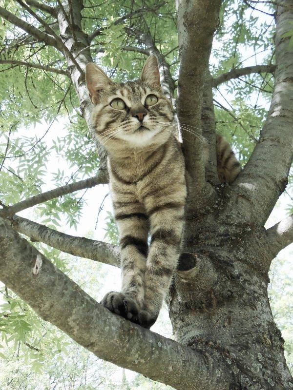 ►   On ne caresse pas un chat, c'est lui qui se caresse à nous.   ◄