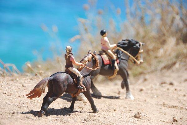 """""""Mais... Les autres chevaux ? Ils ne t'intéressent pas ?"""""""