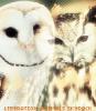 Liberation-Animals