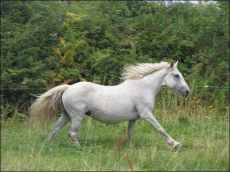Le cheval est la plus noble conquête de l'Homme