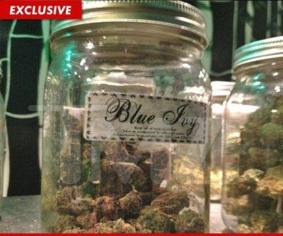 Du cannabis Blue Ivy vendu en Californie :O !