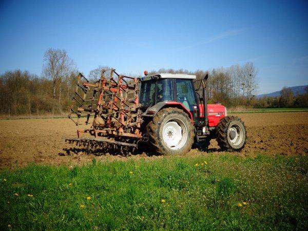 Hersage des terres a maïs
