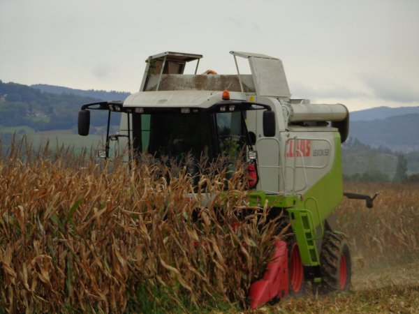 Moisson de maïs 2013