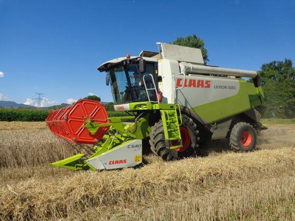 Moisson du blé 2014