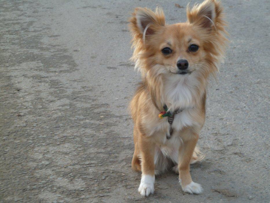 Blog de Iron-Dog-Chihuahua