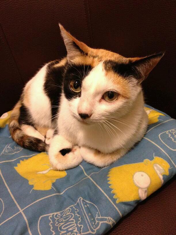 voilà Alice, le chat qui m a comblée de bonheur