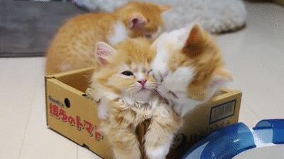 des chats adorables, qu ont ne cesse d admirés et d aimer