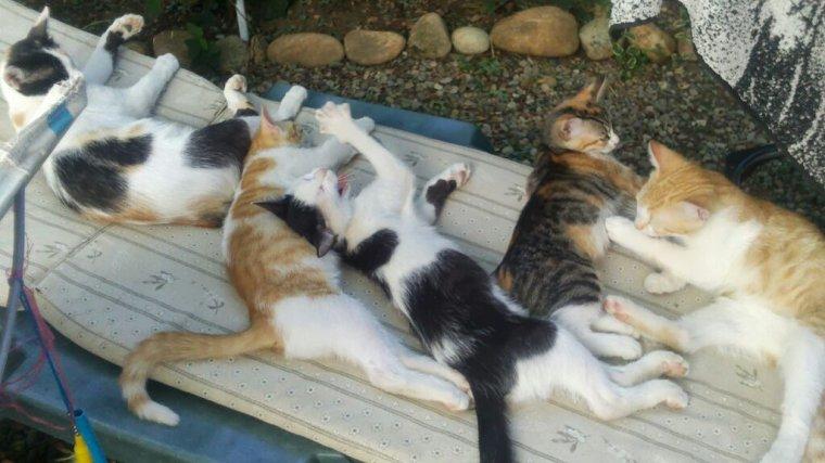 la photo que je suis contente d avoir retrouver de mes 5 chats que j aimais tant