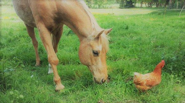 Arrivée de Si Jolie avec mes autres chevaux le 29.04.18