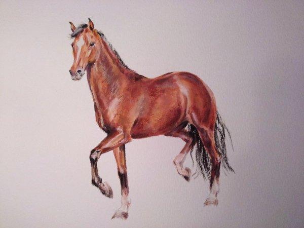 Petit cheval bai - gouache sur papier aquarelle