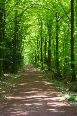 Aux portes de la forêt