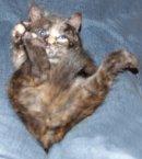 Photo de esquisse-le-chat